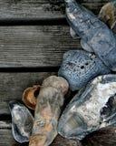 Zeeschelpen op Houten Dek Royalty-vrije Stock Afbeeldingen