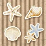 Zeeschelpen op kartonachtergrond Stock Foto's