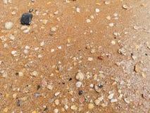 Zeeschelpen op nat zand stock foto