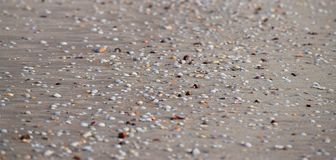 Zeeschelpen op Sandy Beach - Abstracte Marine Background Royalty-vrije Stock Foto