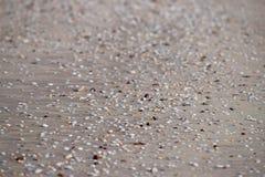 Zeeschelpen op Sandy Beach - Abstracte Marine Background Stock Fotografie