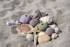 Zeeschelpen op Strand Stock Foto's