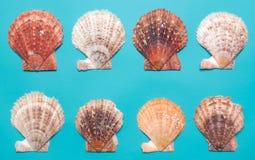 Zeeschelpen op turkooise achtergrond Stock Afbeeldingen