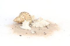 Zeeschelpen op zand op witte bakcground wordt geïsoleerd die royalty-vrije stock fotografie