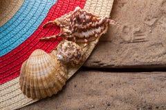 Zeeschelpen op zandachtergrond stock afbeeldingen