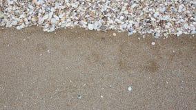 Zeeschelpen op zandstrand Stock Afbeelding