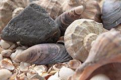 Zeeschelpen, overzeese shells - texturen of achtergronden - diverse kiezelstenen, stenen en winkelhaken stock fotografie
