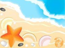 Zeeschelpen, seastar op strand en overzeese achtergrond Stock Fotografie