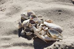 Zeeschelpen van diverse types en grootte op schoon zand stock afbeeldingen