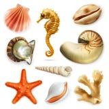 Zeeschelpen, vectorpictogramreeks Stock Foto
