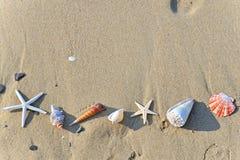 Zeeschelpen in zand Stock Foto