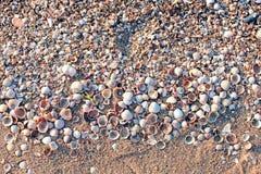 Zeeschelpenachtergrond Stock Foto