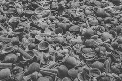 Zeeschelpenachtergrond in zwart-wit Sluit omhoog mening van vele die zeeschelpen bij het strand worden opgestapeld Royalty-vrije Stock Afbeelding