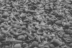 Zeeschelpenachtergrond in zwart-wit Sluit omhoog mening van vele die zeeschelpen bij het strand worden opgestapeld Royalty-vrije Stock Foto's