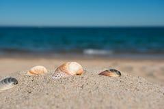 Zeeschelpenclose-up op een zandig strand tegen de overzeese achtergrond Stock Fotografie