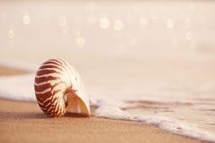 Zeeschelpnautilus op overzees strand met golven onder zonsopgangzon ligh Royalty-vrije Stock Afbeelding