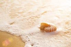 Zeeschelpnautilus op overzees strand met golven onder zonsopgangzon ligh Stock Fotografie