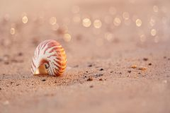Zeeschelpnautilus op overzees strand met golven onder zonsopgangzon ligh Royalty-vrije Stock Fotografie