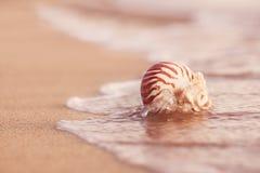 Zeeschelpnautilus op overzees strand met golven onder zonsopgangzon ligh stock afbeeldingen