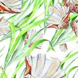 Zeeschelpoverzees, alge, waterverf Royalty-vrije Stock Fotografie