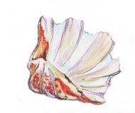 Zeeschelpoverzees, waterverf Royalty-vrije Stock Afbeeldingen