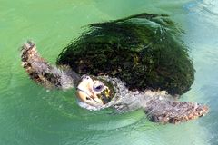 Zeeschildpad Stock Fotografie