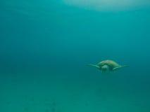Zeeschildpad die in de oceaan zwemmen Stock Fotografie