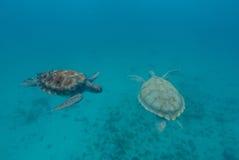 Zeeschildpad die in de oceaan zwemmen Royalty-vrije Stock Foto's