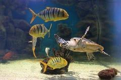 Zeeschildpad en zijn milieu Royalty-vrije Stock Foto's