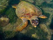 Zeeschildpad in het Ionische Overzees op het Griekse Eiland Kefalonia, Griekenland royalty-vrije stock foto