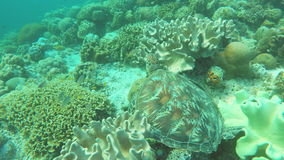 Zeeschildpad in het tropische overzees stock videobeelden