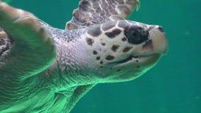 Zeeschildpad Marine Life stock video