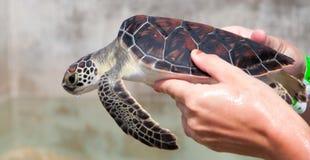 Zeeschildpadden Stock Foto