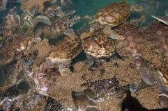 Zeeschildpadden Stock Afbeeldingen