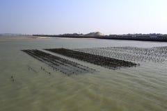 Zeeslagebieden bij strand van xiaodengeiland, China Stock Afbeeldingen
