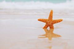 Zeester bij strand, blauwe overzees en de bezinning Stock Afbeelding