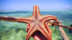 Zeester in de lagune op het zuidelijke strand op de oceaan marin Royalty-vrije Stock Afbeeldingen