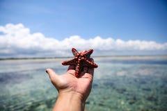 Zeester in de lagune op het zuidelijke strand op de oceaan marin Royalty-vrije Stock Afbeelding