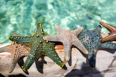 Zeester in de lagune op het zuidelijke strand op de oceaan marin Royalty-vrije Stock Foto