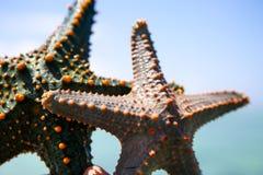 Zeester in de lagune op het zuidelijke strand op de oceaan marin Royalty-vrije Stock Fotografie