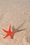 Zeester die lange schaduw op gouden zand giet Stock Foto
