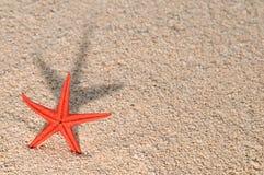 Zeester die lange schaduw op gouden zand giet Stock Afbeeldingen