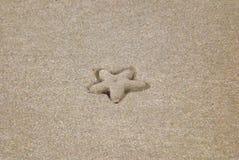 Zeester die in zand in reliëf die wordt gemaakt die een perfecte stervorm vinden stock fotografie