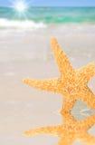 Zeester door Tidepool op Strand Stock Afbeeldingen