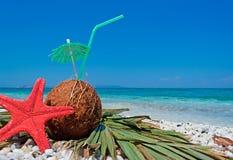 Zeester en kokosnoot royalty-vrije stock foto's
