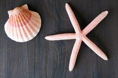 Zeester en shell Stock Foto's