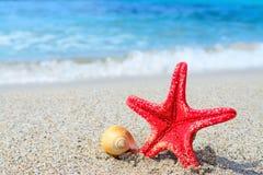 Zeester en shell door de kust stock fotografie
