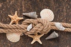 Zeester en shells Stock Afbeelding