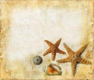 Zeester en Shells op een Achtergrond Grunge stock foto