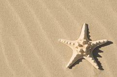 Zeester en zand. Royalty-vrije Stock Afbeelding